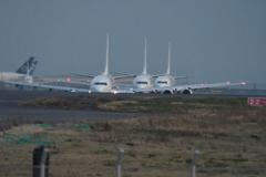 JAL 737 3連単 京浜島