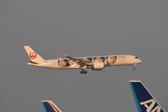 夕暮れのJAL 嵐Jet A350