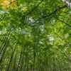 10月14日の美人林