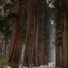戸隠神社 杉並木