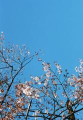 ライカで撮った春の始まり その4