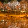 夜桜水鏡【蔵出し】