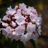 コンペイトウみたいな花