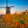Windmill at nightfall
