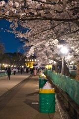 桜とバリケード