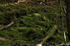 倒木と苔類