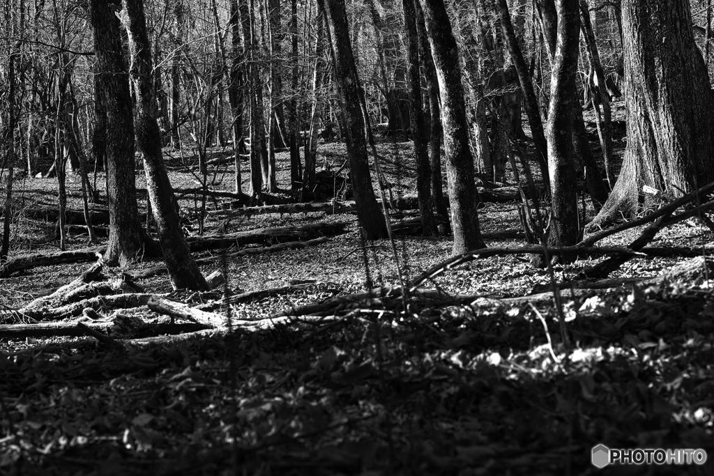 落葉樹の休養林