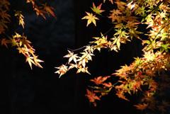 養老渓谷 紅葉