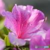 2013年5月の花の公園-①