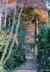 秋の高山寺 ①