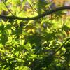 庭の秋-①