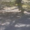 今日のお散歩の友は 200617-①