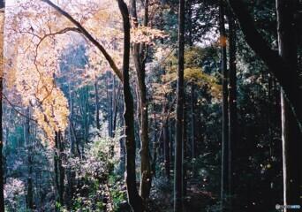 秋の高山寺 ⑧