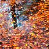 秋の定番写真(フイルム)-①