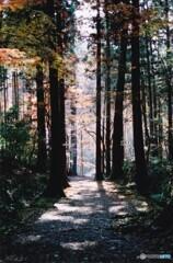 秋の高山寺 ⑥