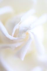 Ondulation Blanche ⑥