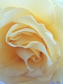 花びらの曲線美-➄