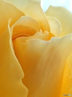 花びらの曲線美-➁
