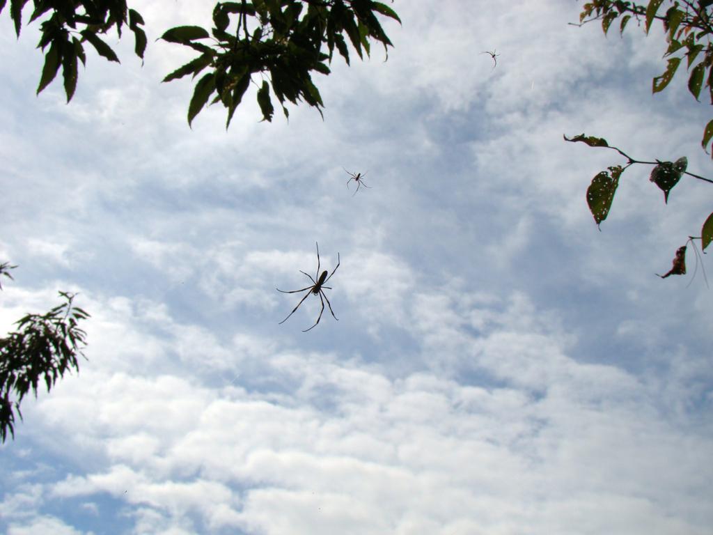 SONY Cyber Shot DSC-H50で撮った2011年秋の我が町-➆