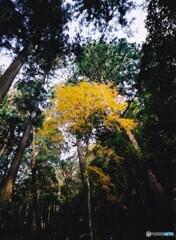 秋の高山寺 ③