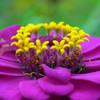 Voightländer Skoparex 1:3.4 35mmでお花を撮る-⑫