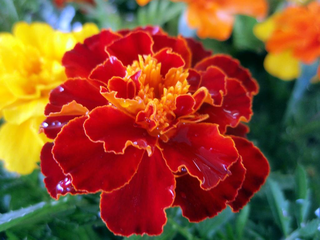 お花がいっぱい! 200503-⑩