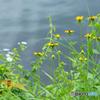 田貫湖周辺ウオーキング200801-①
