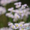 2013年5月の花の公園-➃