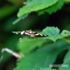 田貫湖周辺ウオーキング200801-④