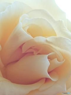 花びらの曲線美-➅