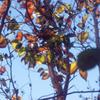 庭の秋-➁
