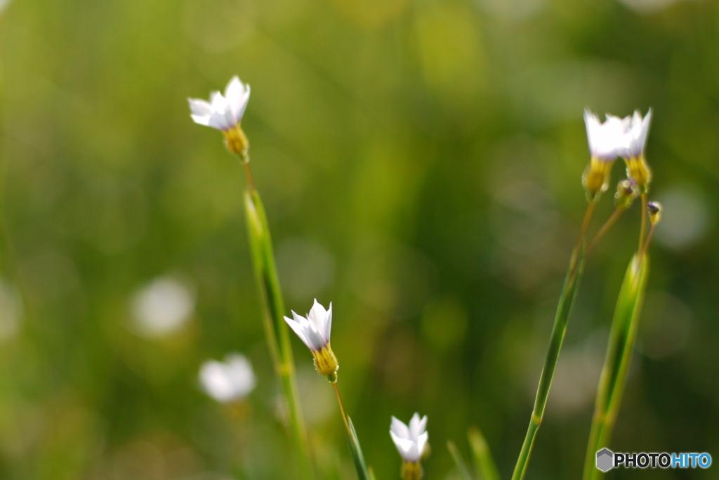 2013年5月の花の公園-➁