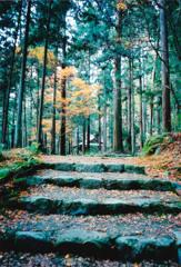 秋の定番写真(フイルム)-⑤