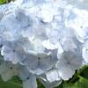 田貫湖周遊200702・植物編-⑨