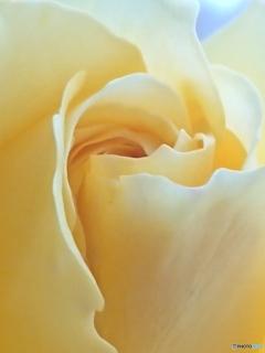 花びらの曲線美-➃