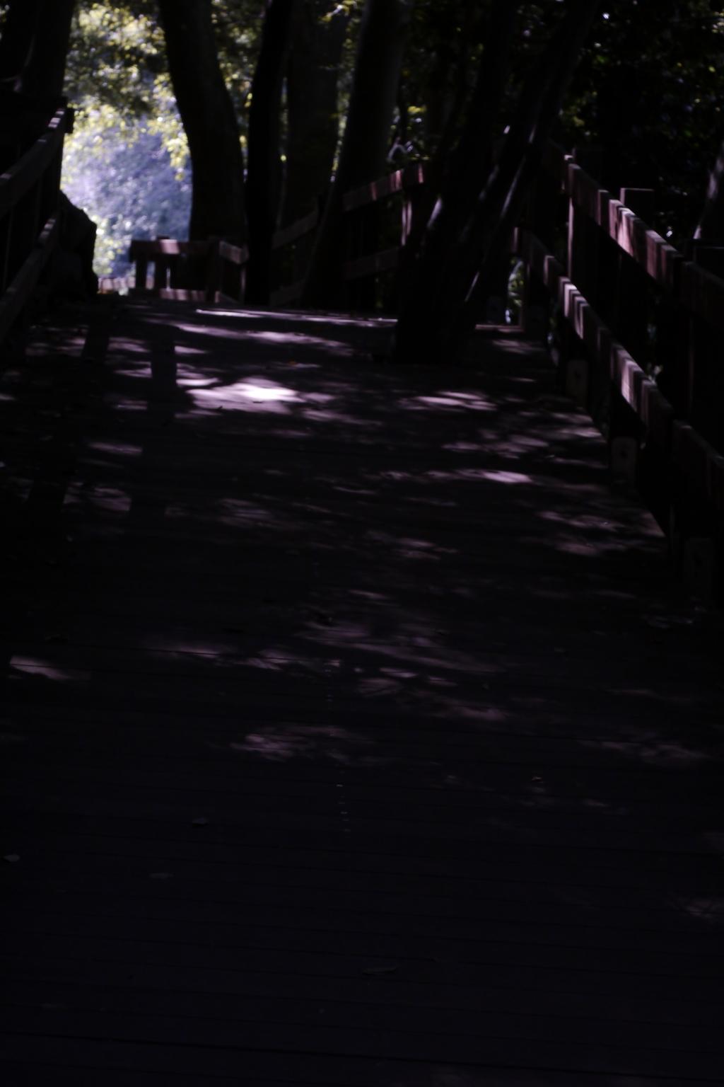 影が導く-➅