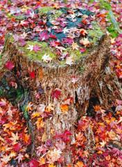 秋の定番写真(フイルム)-➃