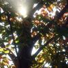 庭の秋-➃