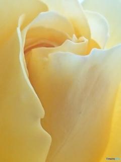花びらの曲線美-③