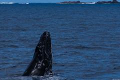 子鯨の冒険