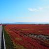 サンゴ草の赤野原