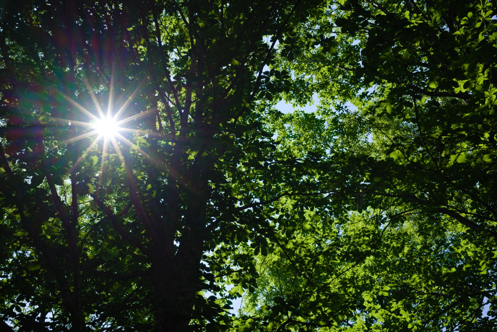 木漏れ日と光芒