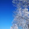 霧氷の並木道