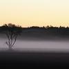 朝霧と木立ちのシルエット