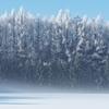 朝霧と霧氷林