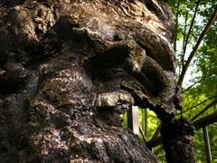 隆起する大樹