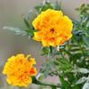今日の花3