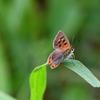 今日の蝶4
