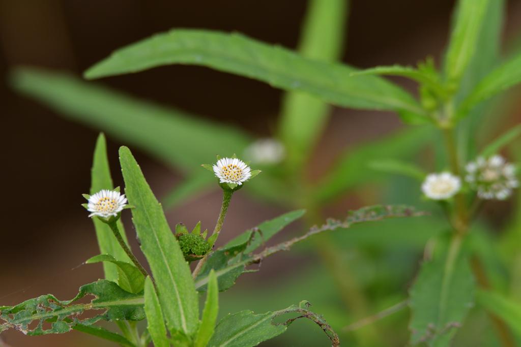 今日の花5