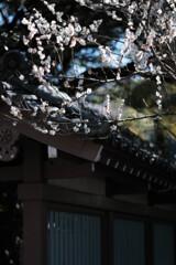 鎌倉・高徳院(大仏殿)5